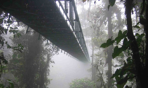 Cloud Forest Hanging Bridges